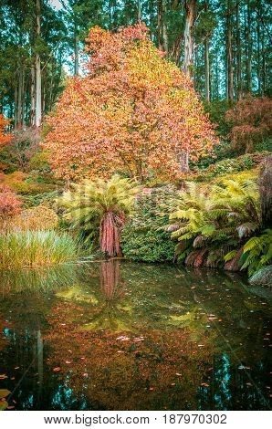 Beautiful Lake, Ferns And Orange Trees In Autumn. Melbourne, Victoria, Australia.