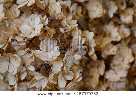 Blurred Of Dried Flowers For Decoration