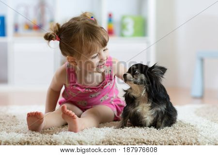 Child girl plays with little dog black hairy chihuahua doggy poster