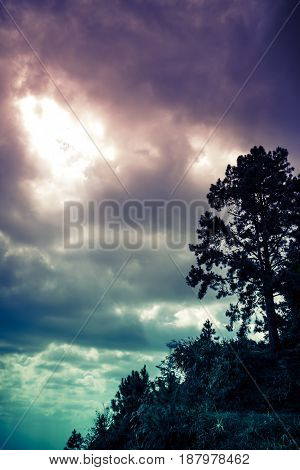 Silhouette Of Tree With Dark Sky And Cloudy On Serenity Nature Background.