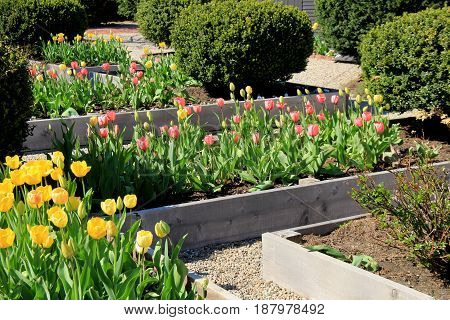 Horizontal image of several beds of flowers in Springtime garden