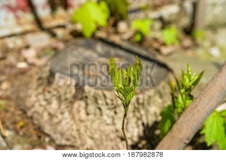 Close up image of young green tree sprout growing from ground for spring background