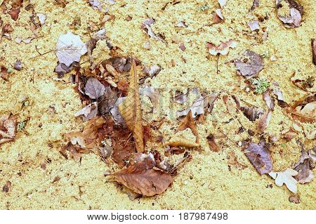 Autumn leaves on wet dirt sandy road. Rotten dark leawes on sand ground sandbox.