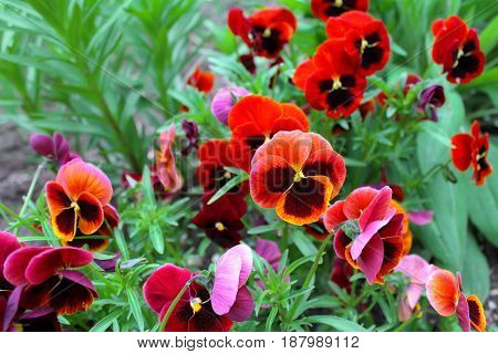 Red and purple flowers on a green background.