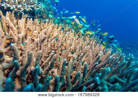 Underwater Landscape With Hundreds Of Fishes