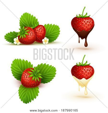 Close up red ripe strawberry with leaves vector illustration. Ripe fruit red berry isolated on white