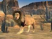 male lion in dry scene landscape poster