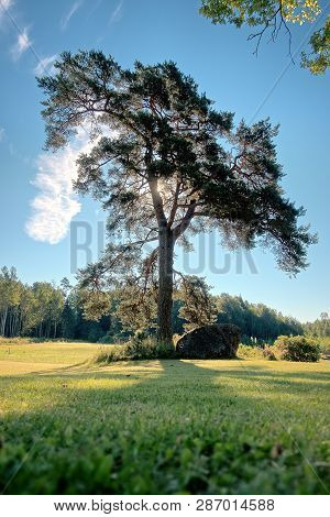 Bare Lonely Tree On A Sunny Summer Day In Lodja, Estonia. An Unique Minimalistic Fineart Image. Sere