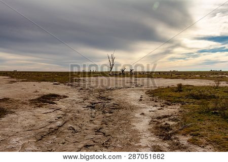 Dead Trees In The Abandoned City Of Epecuen. Flood That Destroyed The City And Left It In Ruins. Des