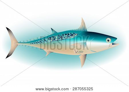 Bonito Fish, Vector Illustratio Sea Ocean Blue