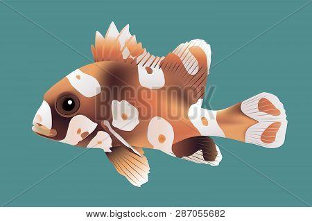 Harlequin Sweetlips Fish, Vector Illustration Swim Sea
