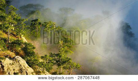 Sunlight In Misty Mountain Evergreen Conifer Forest