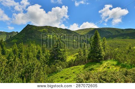 Summer Forest. Evergreen Mountain Conifer Forest In Highland