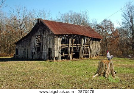 A picture of a old barn and a rooster on a tree stump poster