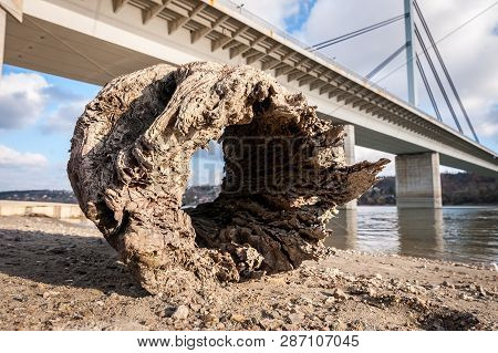 Rotten Stump, Big Old Rotten Tree Stump With Hole As Driftwood On The Sandy Beach Shoreline Near Wat
