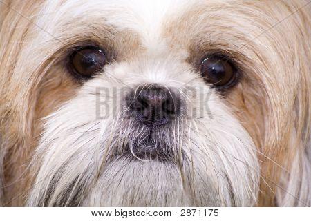 Dog Face.