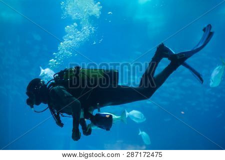 Diver diving with a scuba set in the sea.