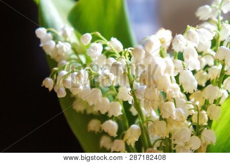 Fresh Small Flowers Lilies Of The Valley, Lily Of The Valley Flowers, Beautiful