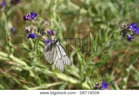 Vacker fjäril i Vegetation