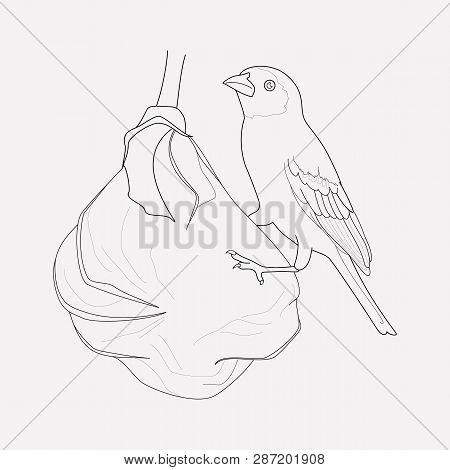 Weaver Bird Icon Line Element.  Illustration Of Weaver Bird Icon Line Isolated On Clean Background F