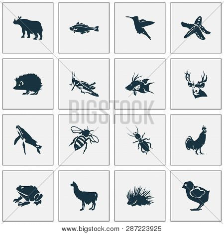 Animal Icons Set With Whale, Hogfish, Thermit And Other Rhinoceros Elements. Isolated Vector Illustr