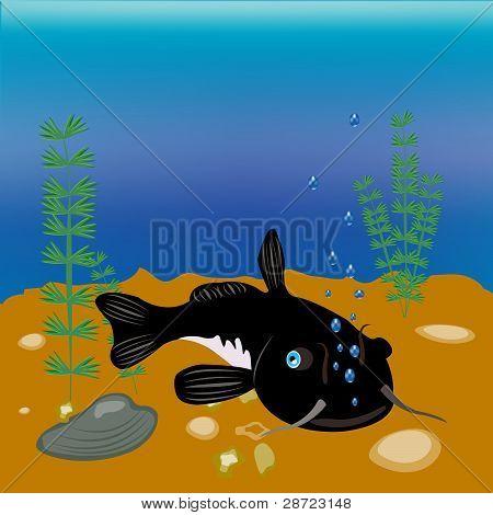 Fish Sheatfish On Day