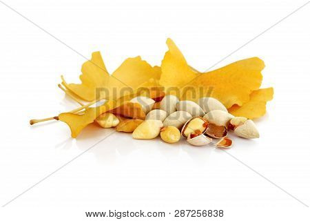 Gingko Nuts With Yellow Gingko Leaves On White Background (gingko Nuts Are Used As Chinese Herbal Me