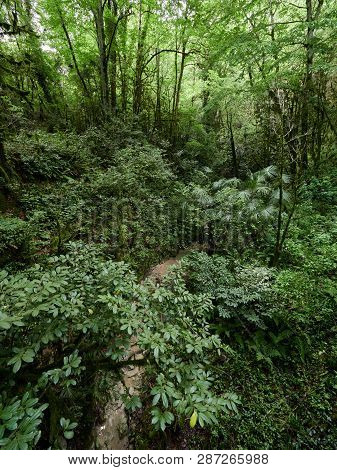 Thicket Of A Lush Green Forest With Parched Stream