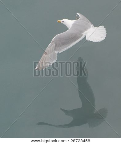 Seagull And Its Shadow