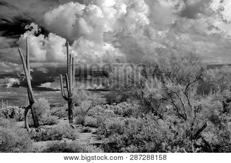 The Sonora Desert In Central Arizona Usa In Monochrome Infrared