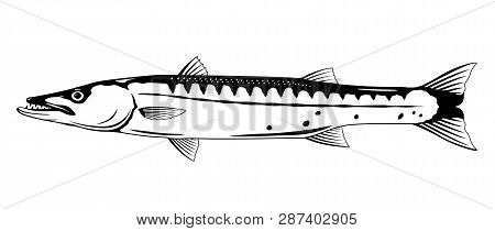 One Barracuda Fish L In Side View In Black And White Color, Isolated