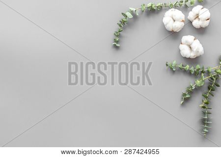 Flowers And Leaves Layout. Cotton Near Eucalyptus Branches On Grey Background Top View, Flat Lay Cop