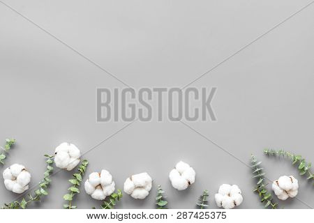 Flowers And Leaves Layout. Cotton Flowers Near Eucalyptus Branches On Grey Background Top View, Flat