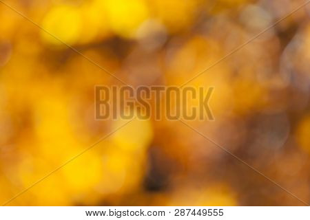 Blurry Background Of Colorful Forest In Autumn