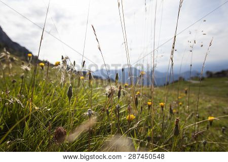 Alpine Meadow In Bavaria, Germany
