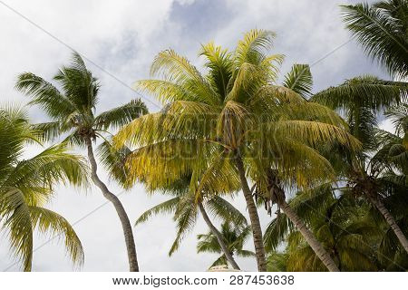 Tropical Landscape View With Palm Trees At Praslin Island, Seychelles