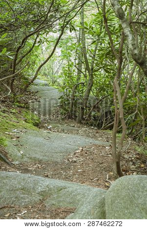 Granite Terraces Serving As Steps On Long Pond Woods Trail In Hopkinton, Rhode Island