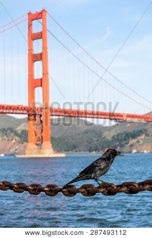 Black Crow Sits On Rusted Chain In Front Of Golden Gate Bridge