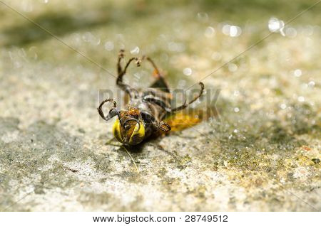 Ants And Wasp In Green Nature Or In Garden