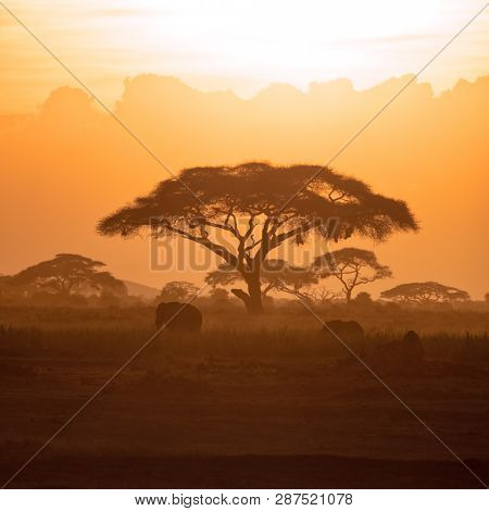 Tranquil scene of a mother elephant and calf walking through Amboseli National Park at sunset, against a background of acaica trees.
