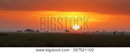 Sunrise in Amboseli National Park, Kenya. A small herd of elephants can be seen walking the the grass near the rising sun. Populard social media banner format.