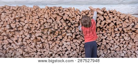 Boy Collecting Firewood. Wood Burned As Fuel. Firewood Stacked Along The Wall. Natural Living. Cutti