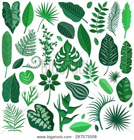 Collection Of Green Tropical Leaves, Palm Tree Branches, Banana Leaf And Exotic Rainforest Leaves In