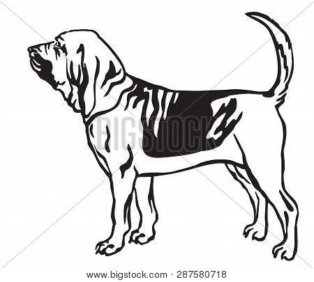 Dog Harness For Treadmill