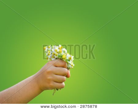 Peaceful hand of a child holding daisies poster