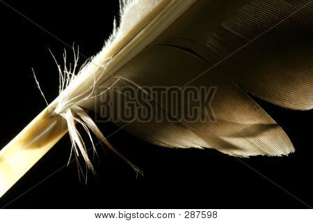 extreme macro of a feather poster