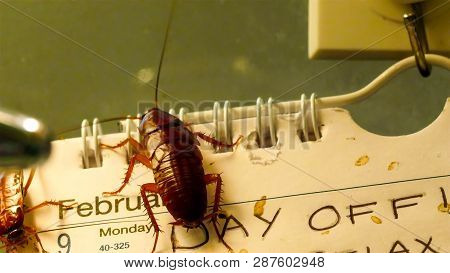 4522_disgusting_brown_shiny_cockroaches_crawling_on_the_calendar.jpg