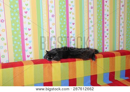 Lazy Black Cat Laying On Colored Back Of Sofa. Black And White Cat Laying On Back Of Sofa With Color