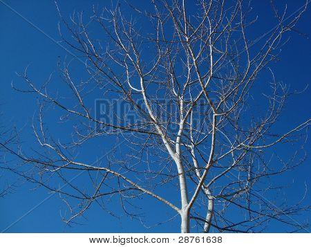 Árvore durante a temporada de outono