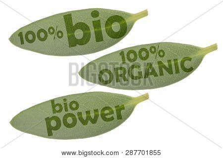 Icon Set With Three Green Leaves And The Inscriptions 100% Organic, 100% Organic And Bio Power